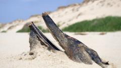 Рекорден брой мъртви делфини изплуват по бреговете на Европа