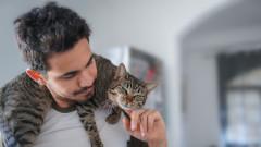 6 причини да си вземем котка