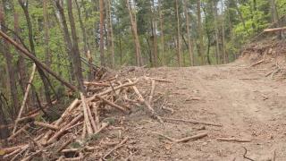 Десетки дървета от благун и цер са били отсечени незаконно