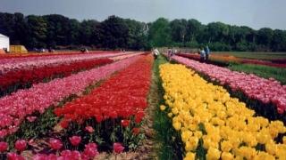 Български щанд на туристическо изложение в Холандия