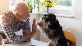 Колко живеят послушните кучета
