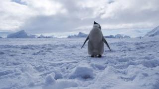 Морето Рос в Антарктида се превърна в най-голямата защитена морска зона в света