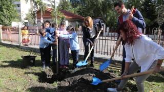 Садят дървета в дворовете на 26 столични училища