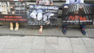 64 организации искат забрана за отглеждане и умъртвяване на животни за кожи