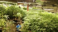 Полицаите иззеха 13 кг марихуана, тример за почистване на листна маса край Годеч