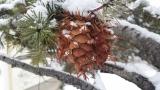 Почти цялата страна с предупреждение за сняг и виелици