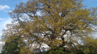 Избираме европейско дърво на 2019 г.
