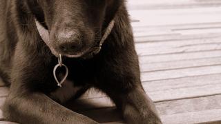 Жестокостта срещу животните ще струва между 500 и 1 000лв.