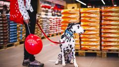 Maxi Pet: повече от зоомагазин
