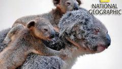 National Geographic организира фотоконкурс за читатели