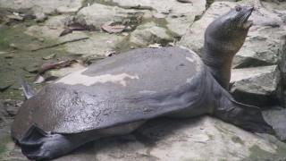 Изследват популациите на 4 вида влечуги в района на Кресненското дефиле