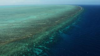 Масов мор на корали в Големия бариерен риф заради климатичните промени