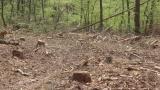 Спипаха трима бракониери на дървесина във врачанския балкан
