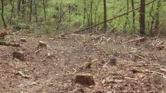 Цигани нападат с колове горски инспектори