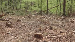 520 куб. м дървесина, над 40 автомобила задържаха лесничеи за месец