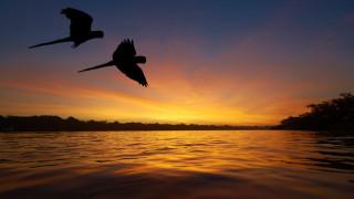 Планирани 428 язовира увреждат трайно басейна на Амазонка