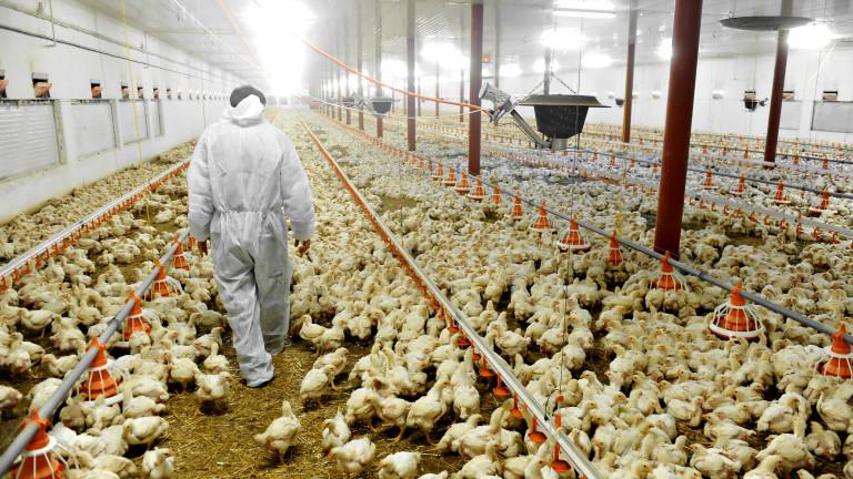 Над 70% от животновъдните ферми в България са изчезнали за 10 години