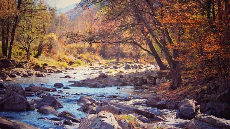 Да спре разчистването на река Вит, поискаха от РИОСВ и Басейнова дирекция