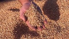 Румъния е увеличила износа на пшеница с 81%