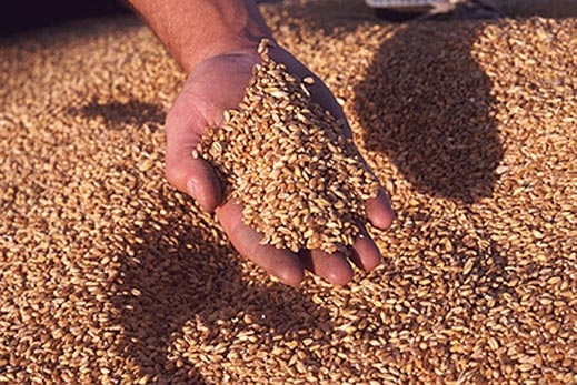 България в очакване на рекорден износ на зърно заради Украйна ...