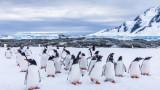 Антарктида - единственият континент без коронавирус