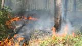 Войници и пожарникари гасят 1000 дка гора в Хасковско