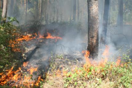 Голям пожар избухна в Бургаско, огнената стихия в Хасковско е почти овладяна