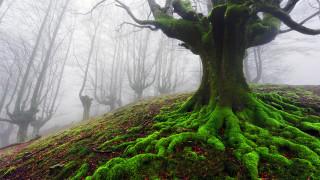 Мистичната гора на Испания