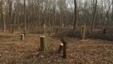 """Невиждана бракониерска сеч в защитената местност """"Туловската кория"""""""