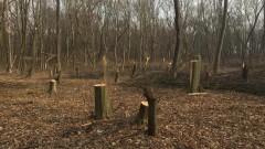 Хванаха незаконен склад за дървесина край Ихтиман