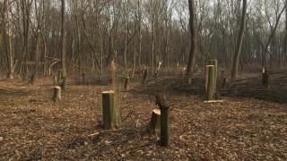 Разбиха група за незаконна сеч на дърва в Исперих