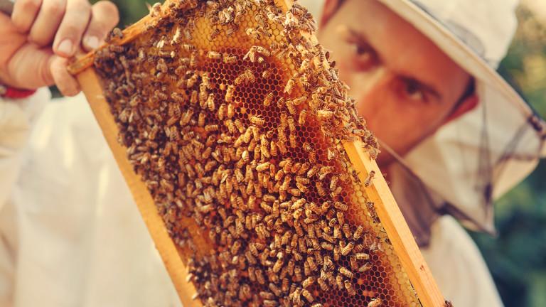 Нацията на пчеларите бие аларма: пчелите правят десет пъти по-малко мед заради климатичните промени