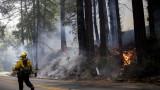 Огромни пожари в Калифорния, вече седмина са загиналите