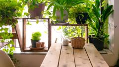 Общинари раздават безплатен компост в центъра на София