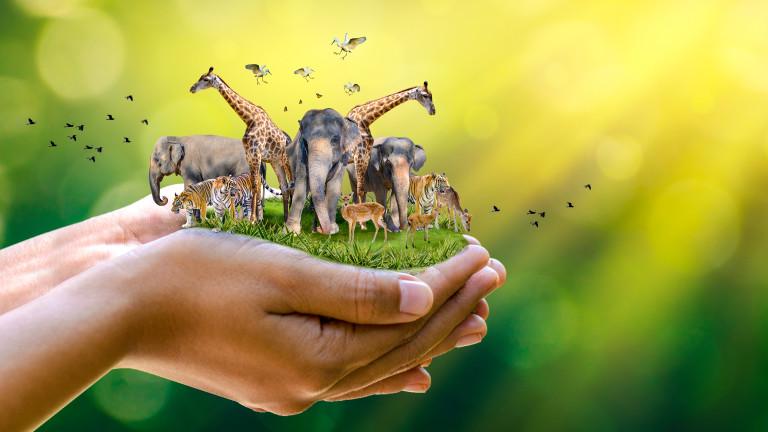Катастрофалният ефект на климатичните промени върху животните