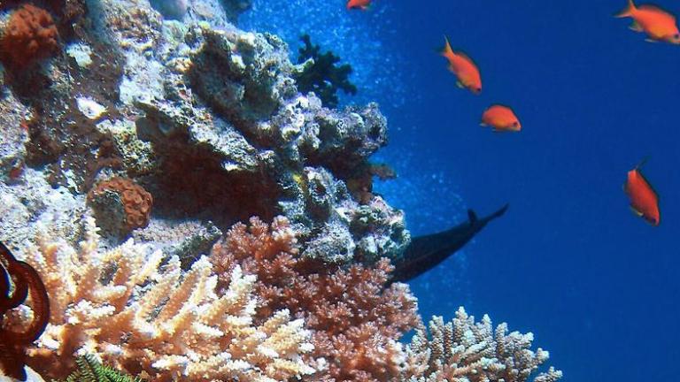 Австралия дири помощ от света за спасяването на Големия бариерен риф