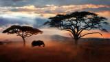 Дивата природа, намаляването на популацията на животинските видове и какви са размерите му