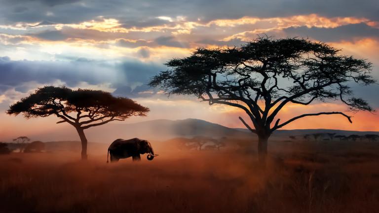 Как унищожихме 68% от дивата природа