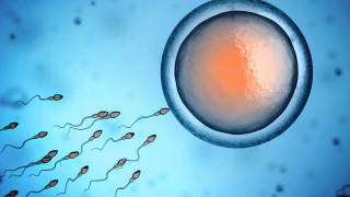 Отгледаха човешка яйцеклетка в лаборатория