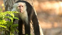 Маймуните, които живеят в Каменната ера