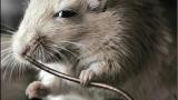 Любопитни факти за хората, животните и още нещо