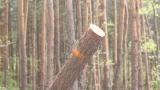 Незабавна прокурорска проверка за незаконна сеч в софийските паркове