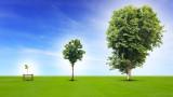 Как дърветата комуникират помежду си
