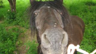 Екшън с кон, каруца и фураж в Кюстендил