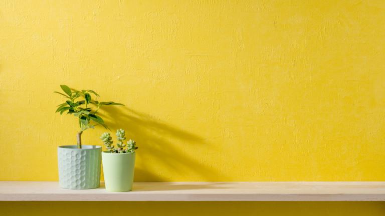 Кои растения какво пречистват в дома ни