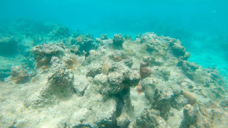 Все повече рифове започват да изглеждат така