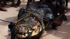 Индонезия обмисля изграждане на затвор, охраняван от крокодили