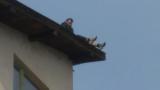 Драма в Сандански - часове наред мъж заплашва да скочи от покрив