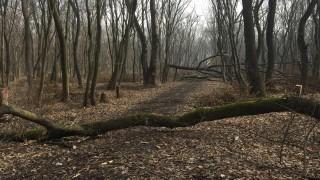 Дърво падна върху бракониер и почти го уби