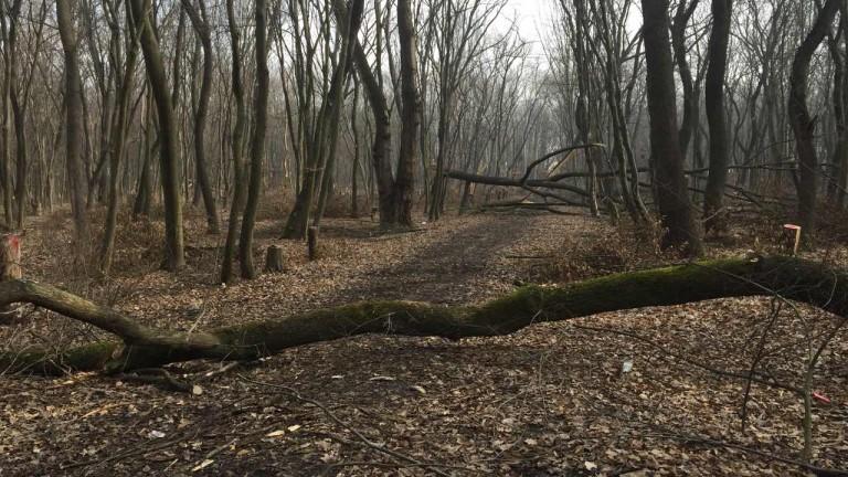 Задържаха четирима бракониери със 17 кубика дървесина в Луковит